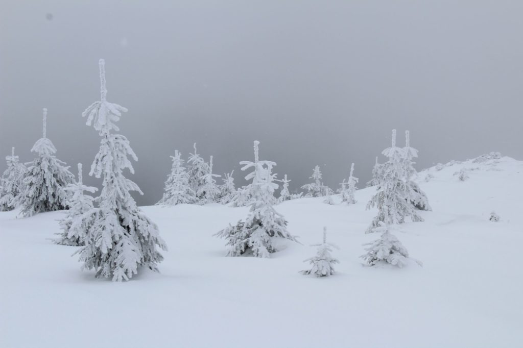 Na Veľký Choč v zime 15