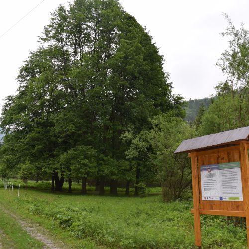 Jubilee Linden Tree Garden in Likavka