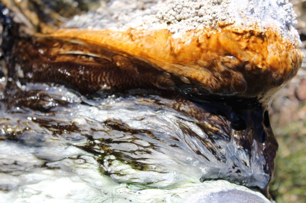 Minerálny prameň Vrt STH - 1A, Stankovany 08