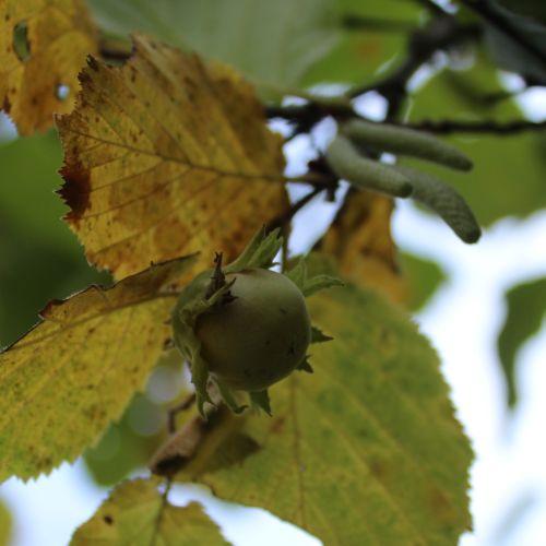 Príroda lieči: Orieškové potulky